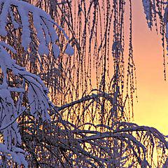 "photo ""Willow at Sunrise"""