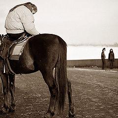 """фото """"лошадь, Питер и немного нервно..."""""""