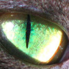 """фото """"Глаз животного"""""""