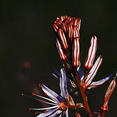 """photo """"Flower#2"""""""