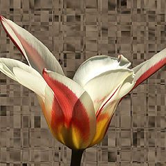 """photo """"The flower and the bird. 1. The flower"""""""