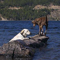 "фото ""Lake Dogs"""
