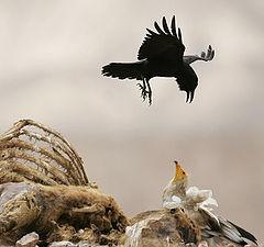 """фото """"Птичьи Войны"""""""