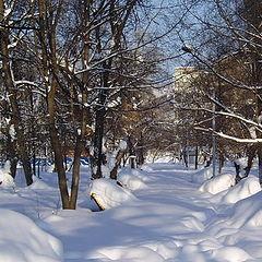 """photo """"Winter avenue"""""""