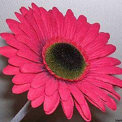 "photo ""My flower."""