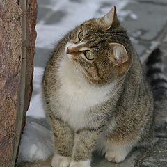 """фото """"Просто мартовский кот."""""""