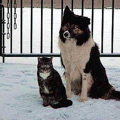 """фото """"best friends"""""""