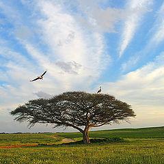 "photo ""Cranes have arrived"""