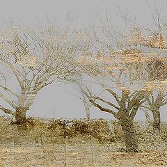 "фото ""Spirit of fog and sand"""