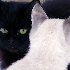 """фото """"Черное и белое"""""""