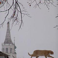 "photo ""Suzdal. Cat"""