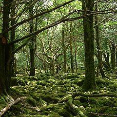"фото ""Ирландский лес"""
