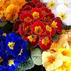 "photo ""Flowers"""