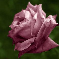 """album """"Flora"""""""