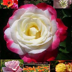 """photo """"A World of Flowers !"""""""