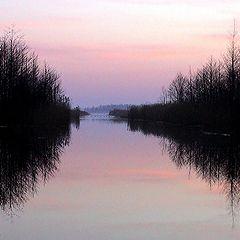 """фото """"the wetland"""""""