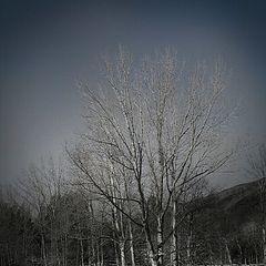 """photo """"White trees"""""""