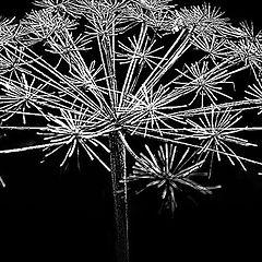 """фото """"galactic plant"""""""