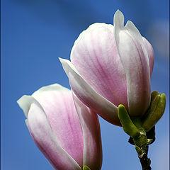 """фото """"Весна"""""""