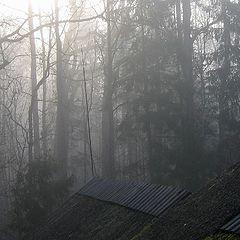"фото ""Today morning through my bedroom window"""