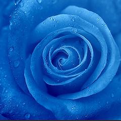 """photo """"Blue Velvet"""""""