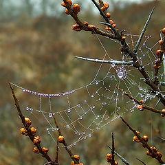 "photo ""Morning dew..."""