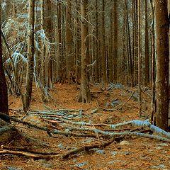 "фото ""Унылый лес"""