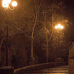 """photo """"Night park"""""""