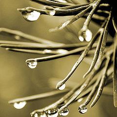 """фото """"Дождь, который подарил мне ты..."""""""