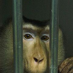 "фото ""жалкая обезьяна"""