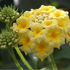"фото ""Flower"""