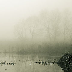 "photo ""Foggy calm."""