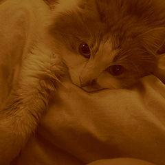 "фотоальбом ""My-My Cat"""