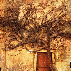 """photo """"magic door"""""""