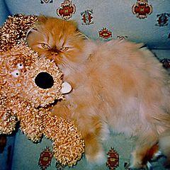 """фото """"Кот и пёс II А мы из Шопа :)"""""""