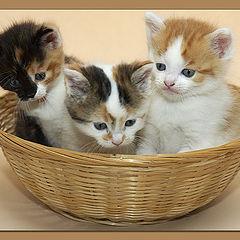 "фото ""Oldie, Mini, & Abricot !"""