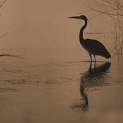 """photo """"Sepia Heron"""""""