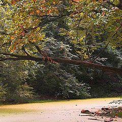 "photo ""Oozy pond"""
