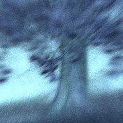 """фото """"Tree #102"""""""