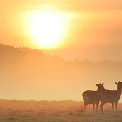 """фото """"Deers"""""""