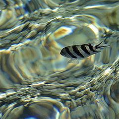 """photo """"Under Water 2"""""""