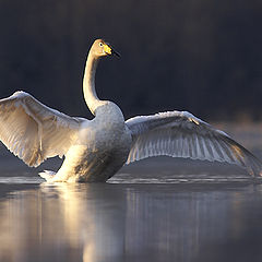 """фото """"With open wings"""""""