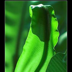 """фото """"Green"""""""