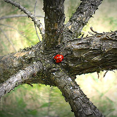 "photo ""Ladybird"""