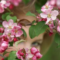 "фото ""Some Flowers"""