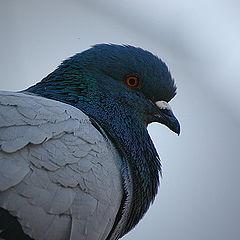 "photo ""Mr Bird"""
