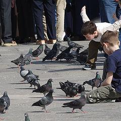 "photo ""Pigeons San Marco"""