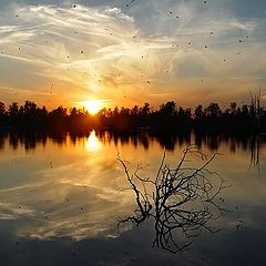 """photo """"Sundown picture with the flooded tree"""""""