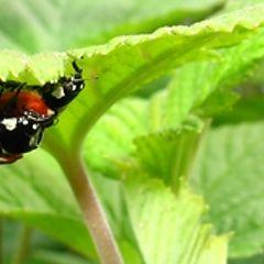 "фото ""ladybug"""