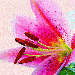 """фото """"Large Pink Lily"""""""
